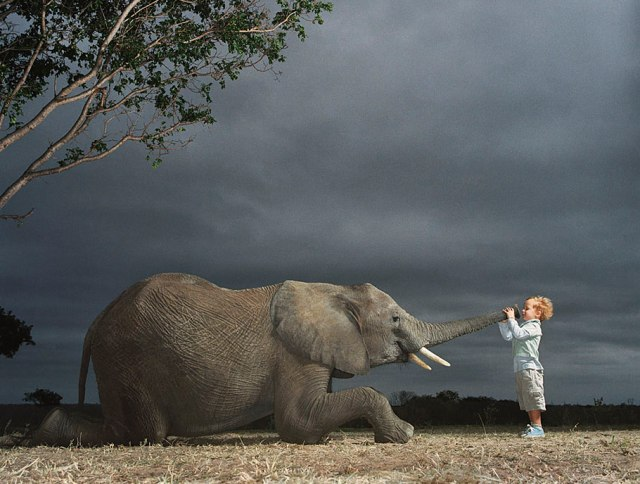 Tim Flach - Elephant Boy