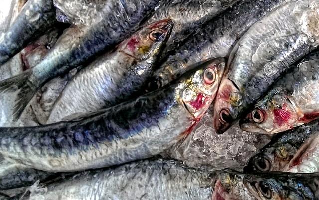 Barney Edwards - Fish