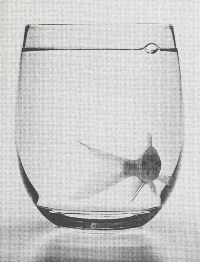 phil-marco-goldfish-glass-01