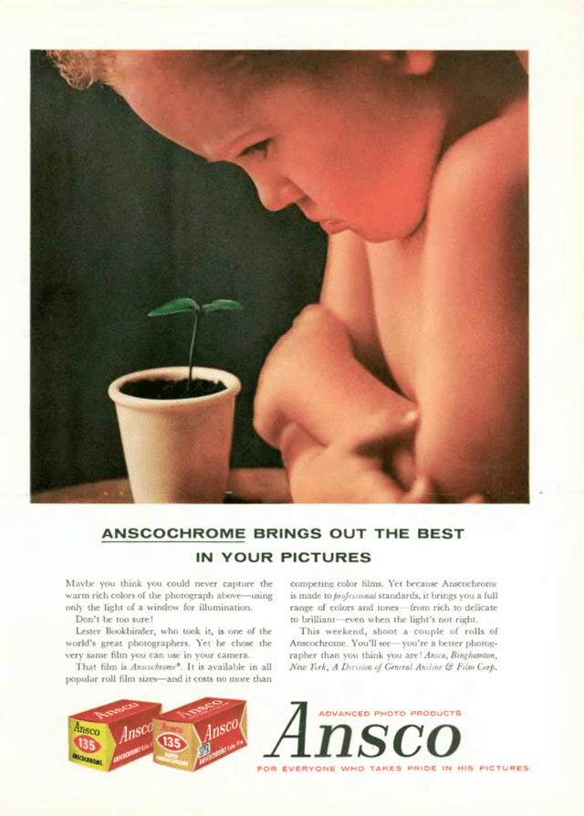 Ansco 'Plant', Lester Bookbinder.png