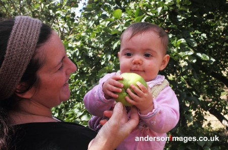 the first eer bite of an apple, fresh from the tree. This little girl came back with her mother and her grandmother for the next 2 years, so far