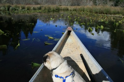 Dizzy is intrigued by the lily pads.