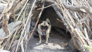 Dizzy found a nice little shelter on the river.