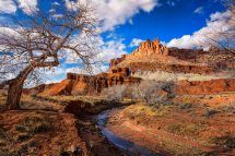 Capitol Reef National Park Conservation Dave Koch