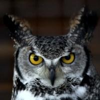 Screech Owl Sanctuary, Cornwall; 22-04-11