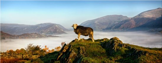 King of Cumbria - Lake District Canvas Prints