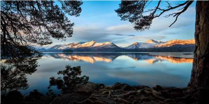Roots and Mountains Derwent Water - Canvas Print