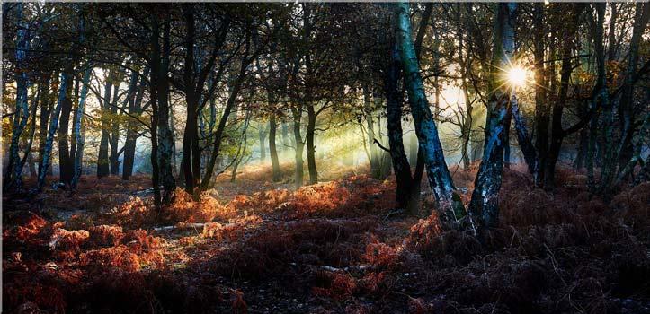 Sherwood Forest Sunlight - Canvas Print