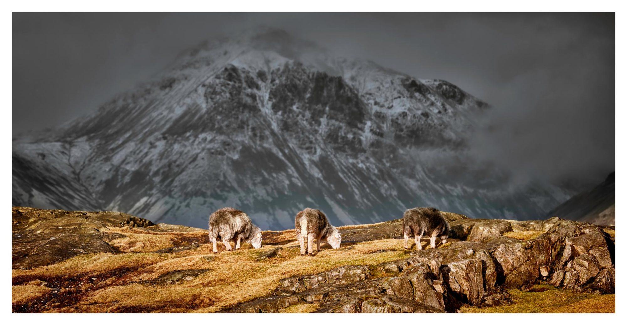 Three Sheep and a Mountain - Lake District Print