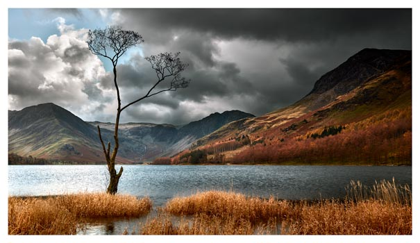 The Buttermere Tree - Lake District Print