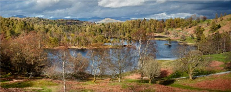 Tarn Hows Spring Sunshine - Canvas Prints