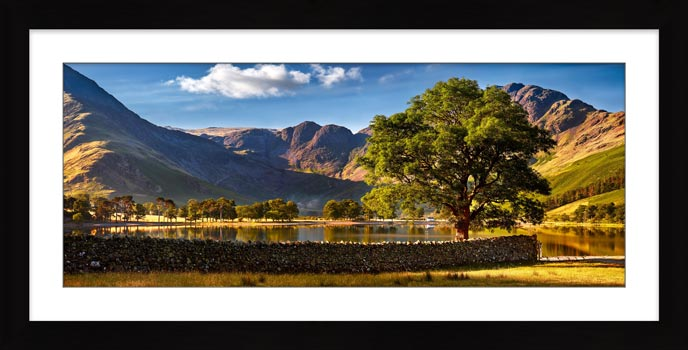 The Buttermere Oak Tree - Framed Print