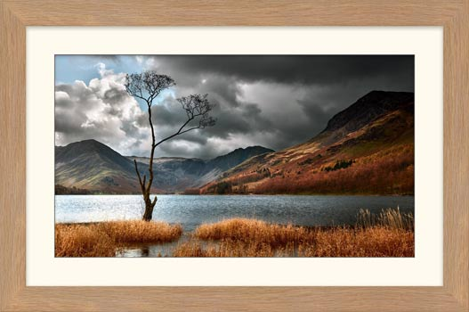 The Buttermere Tree - Framed Print with Mount