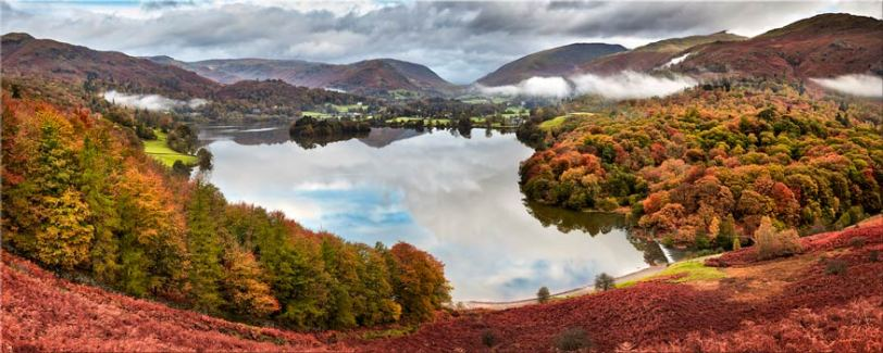 Trees of Grasmere - Lake District Canvas