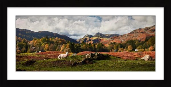 Sheep on Elterwater Common - Framed Print with Mount