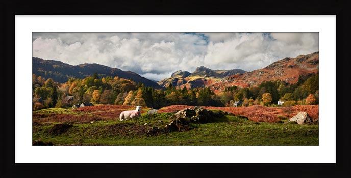 Sheep on Elterwater Common - Framed Print