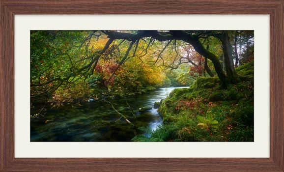 River Derwent in Autumn - Framed Print