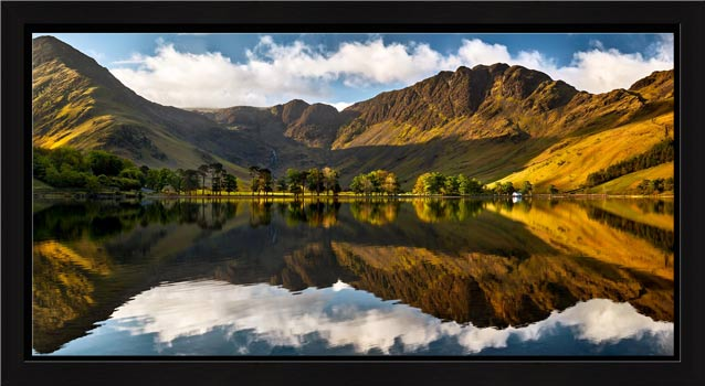 First Light on the Buttermere Pines - Modern Print