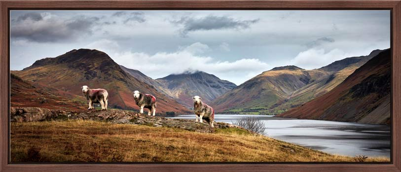 Three Sheep at Wast Water - Modern Print