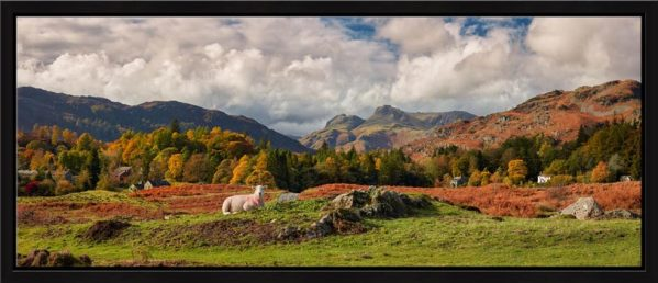 Sheep on Elterwater Common - Floating Frame