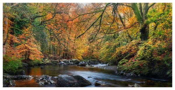Golden Trees of Eskdale - Lake District Print