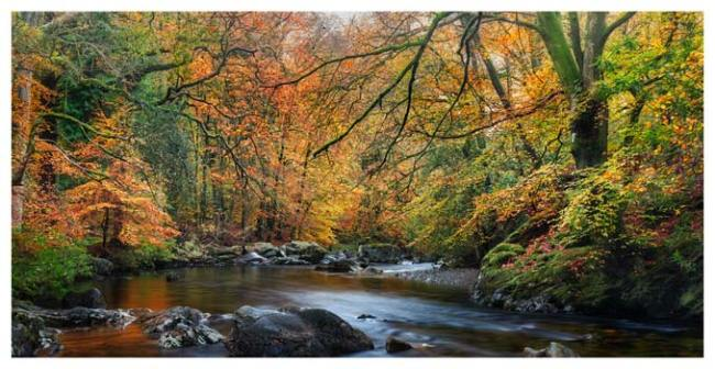 Golden Trees of Eskdale - Lake District Print