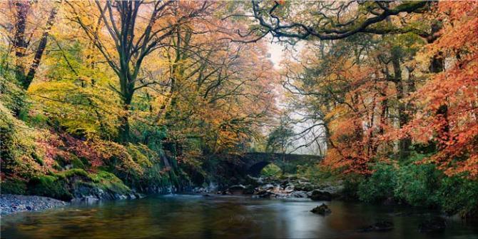 River Esk Bridge in Autumn - Canvas Print