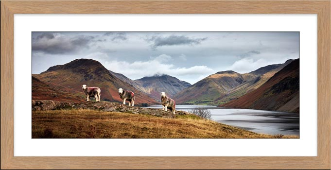 Three Sheep at Wast Water - Framed Print