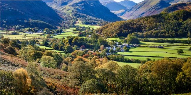 Trees of Borrowdale - Canvas Print