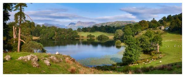 Summer Greens of Loughrigg Tarn - Lake District Print