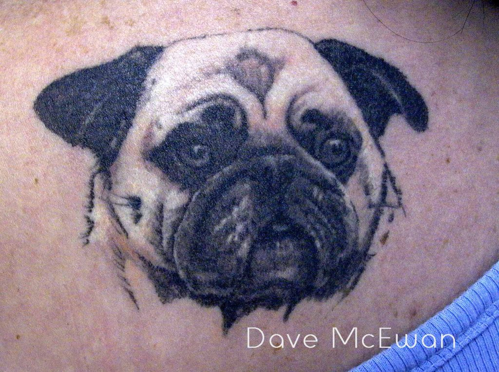 dog portrait tattoo Tauranga New Zealand