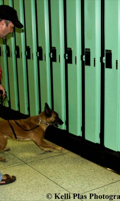 Locker sniffing and Attack Training Are you looking a little more then just obedience training? Dave also trains dogs for locker sniffing and guard dogs.