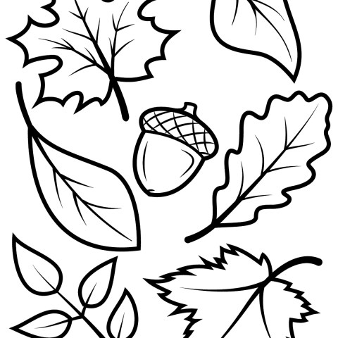 Acorn Coloring Pages Fall Leaves And Acorn Coloring Page Free Printable Coloring Pages
