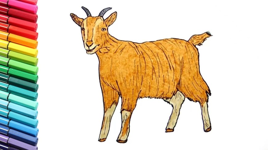 Animals Coloring Pages Drawing And Coloring A Goat Learning Farm Animals Color Pages For