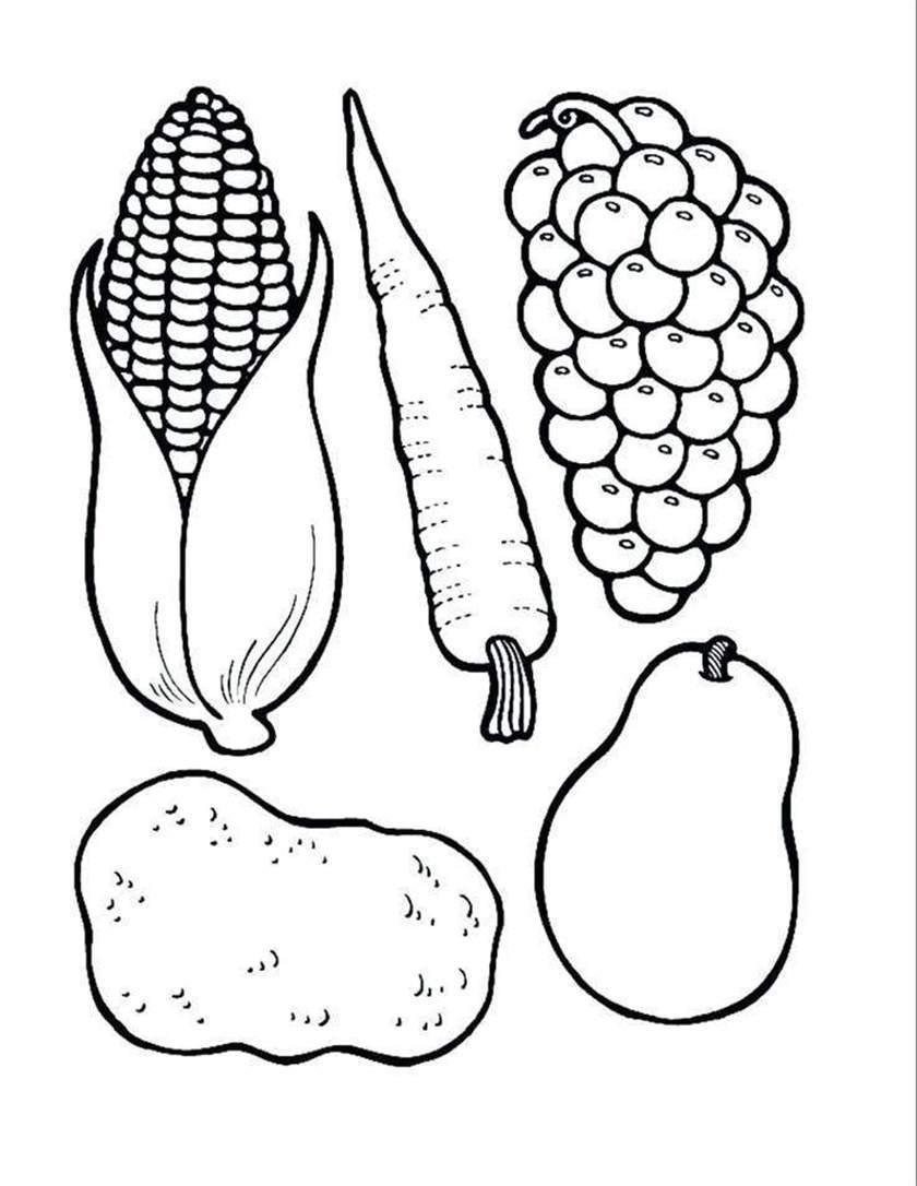 Cornucopia Coloring Pages Cornucopia Coloring Pages Printable Activity Free Printable