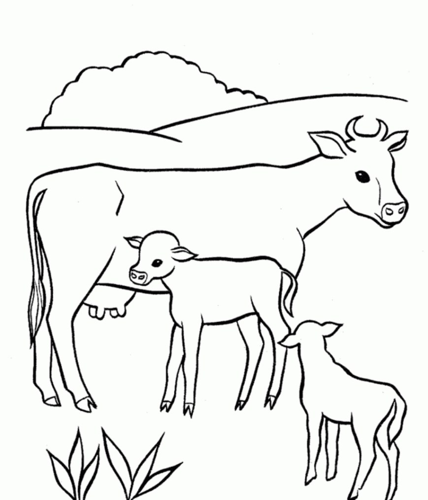 Cow Coloring Page 37 Ba Cow Coloring Pages Cute Ba Cows Coloring Pages