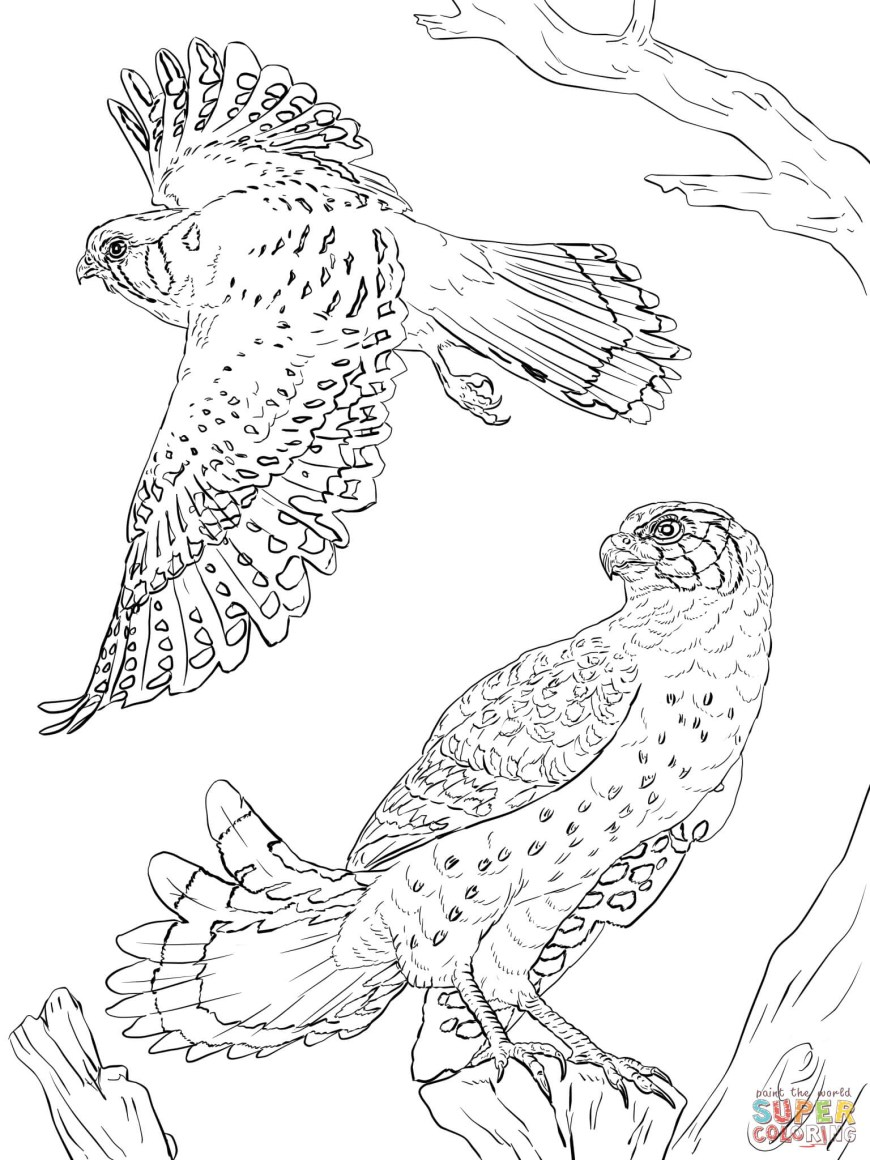 Falcon Coloring Pages Falcons Coloring Pages Free Coloring Pages