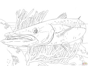 Fish Coloring Pages Barracuda Fish Coloring Page Free Printable Coloring Pages