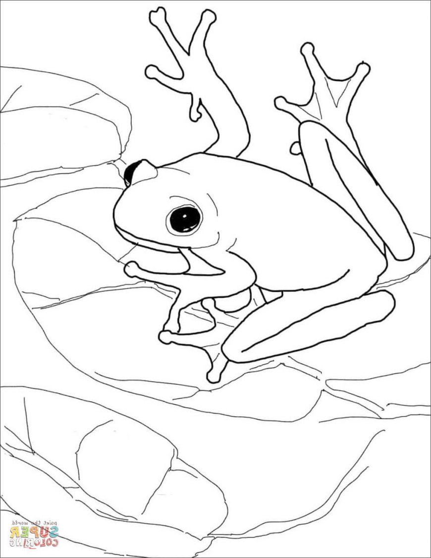 Frog Coloring Pages Swiming Frog Coloring Pages For Kids Printable Coloring Page For Kids