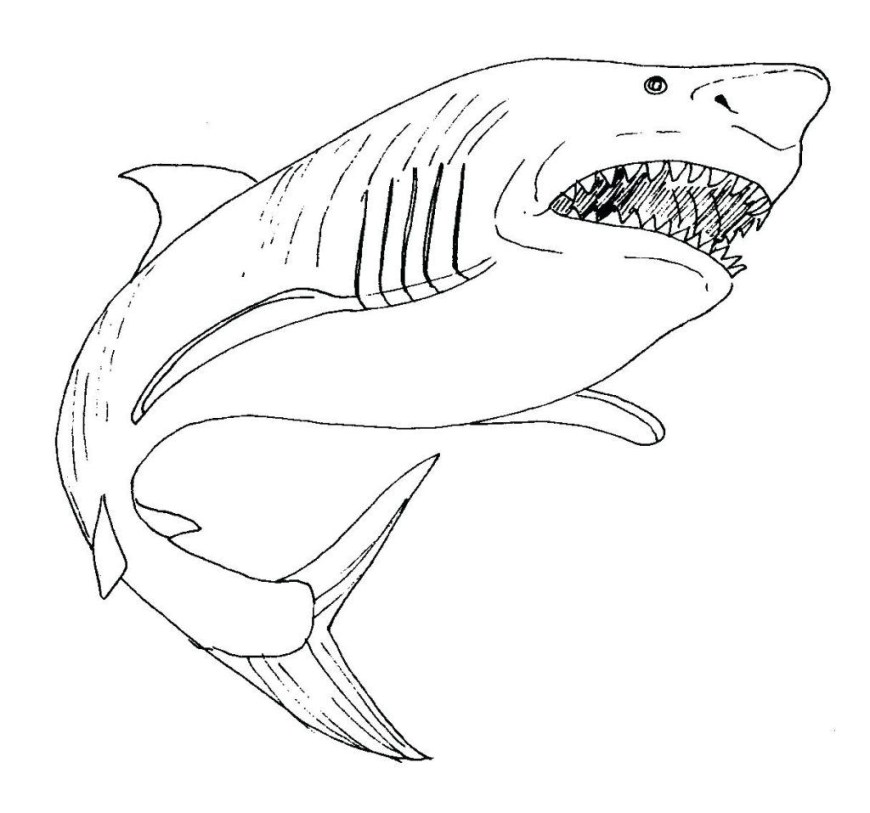 Great White Shark Coloring Pages Free Printable Shark Coloring Pages For Kids In Great White Ba