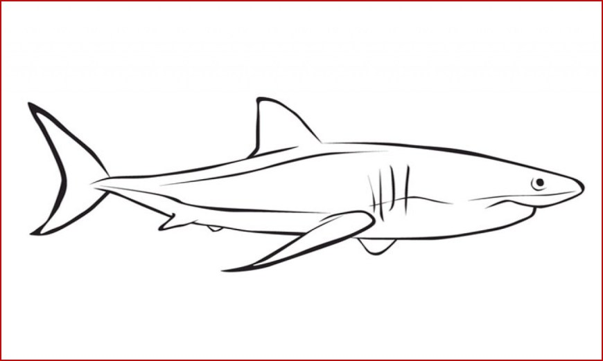 Great White Shark Coloring Pages Great White Shark Coloring Pages 44272 78 Best Hammerhead Sharks