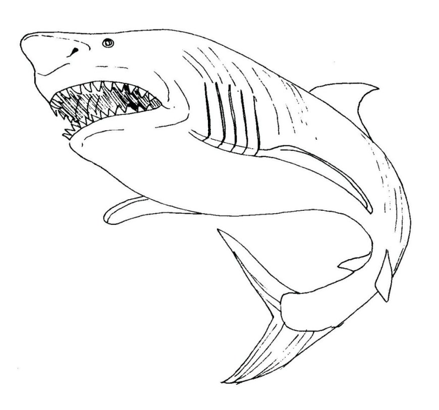 Great White Shark Coloring Pages Great White Shark Coloring Pages 9ncm Great White Shark Coloring