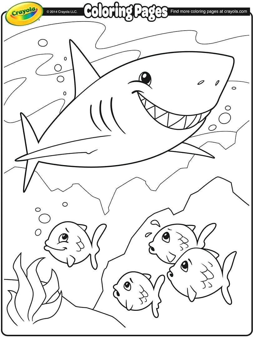 Great White Shark Coloring Pages Shark Coloring Page Great White Shark Color Pages