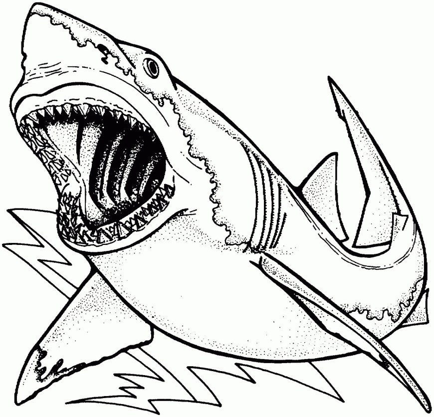 Great White Shark Coloring Pages Shark Coloring Pages Dayleswood
