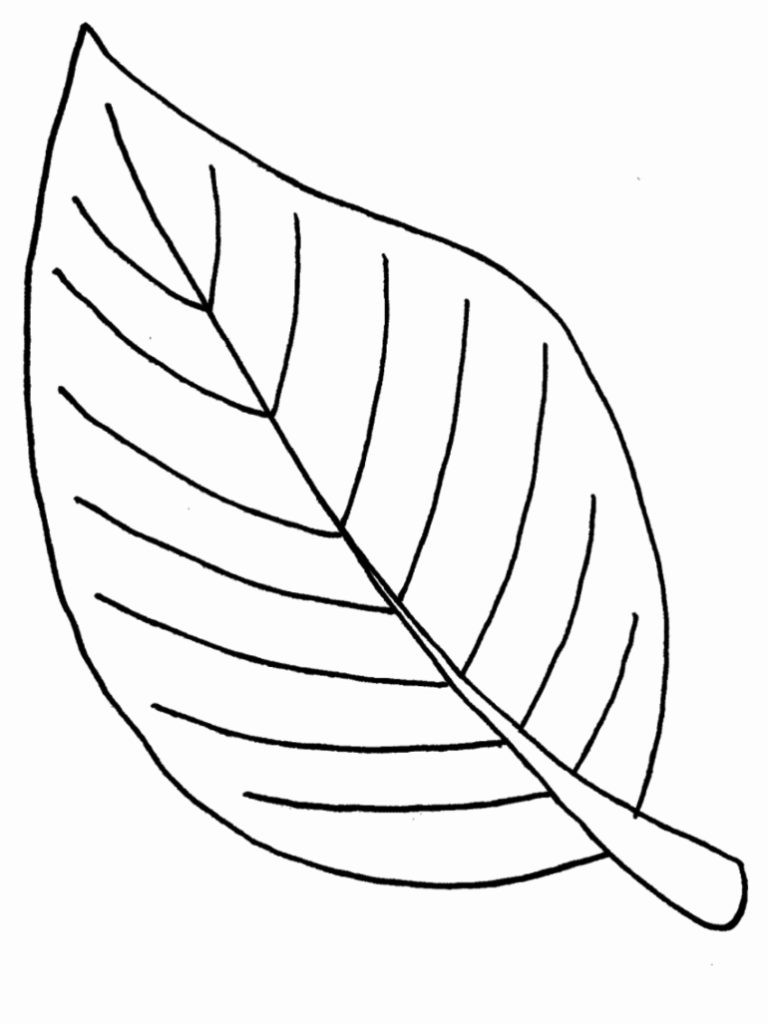 Leaf Coloring Pages Leaf Color Pages Coloring Book For Kids 7681024 Attachment