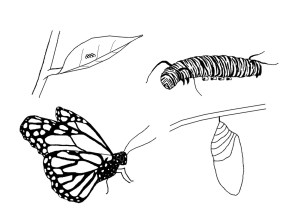 Monarch Butterfly Coloring Page Butterfly Coloring Pages Wpvote