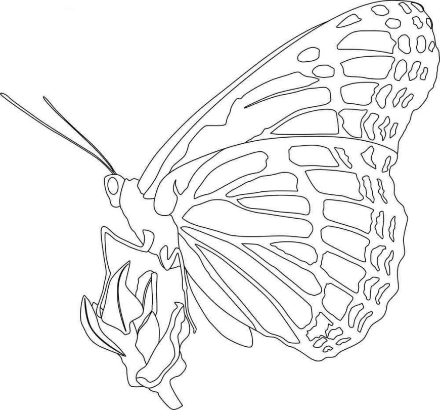 Monarch Butterfly Coloring Page Monarch Butterfly Coloring Pages 1000 X 932 7533 Kb