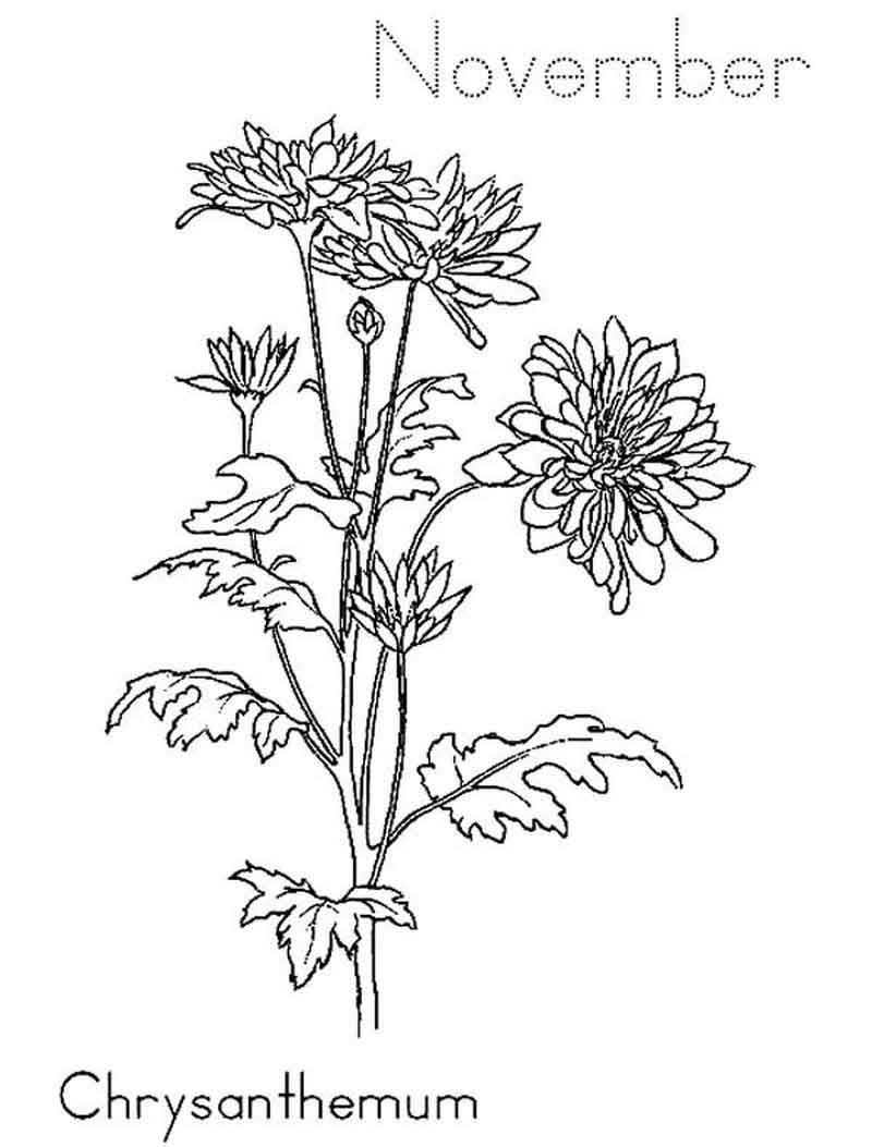 November Coloring Pages Fall Flowers November Coloring Pages