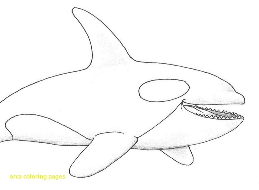 Orca Coloring Pages Jumping Orca Coloring Page Pages 2 Futurama