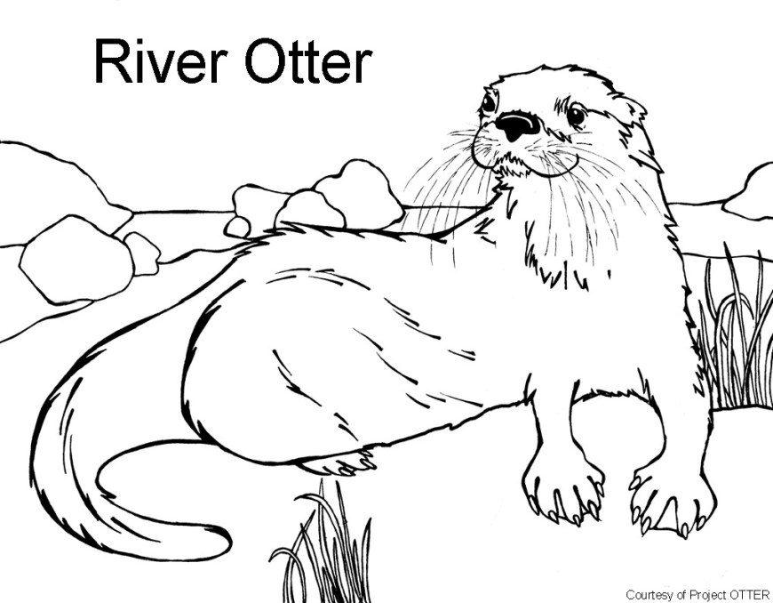 Otter Coloring Pages Coloring Pages Little Cute Otter Smiles Stock Vector Art More And